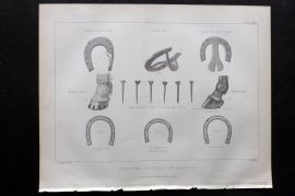 Miles C1890 Antique Horse Print. Farriery - Varieties of Shoes &C.